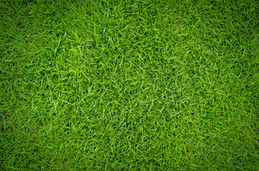 green grass natural background texture