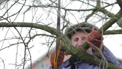 Photos illustrations et vid os de abricotier cat gorie passe temps et loisirs - Spring trimming orchard trees healthy ...