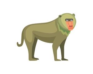 Baboon monkey cartoon illustration. Wildlife of africa