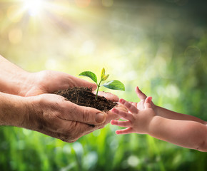Wall Mural - Old Man Giving Young Plant To A Child - Environment Protection For New Generation
