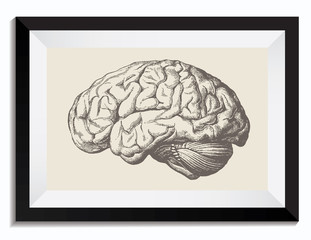Vintage Retro Science Vector Drawing of a Brain in Frame