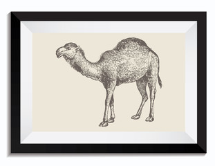 Vintage Retro Vector Drawing Illustration of a Camel in a Frame
