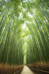 Bambuswald, Arashiyama, Kyoto, Japan