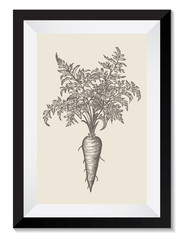 Vintage Retro Vector Drawing Illustration of a Carrot in a Frame