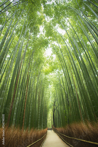Bambuswald Arashiyama Kyoto Japan Stock Photo And Royalty Free