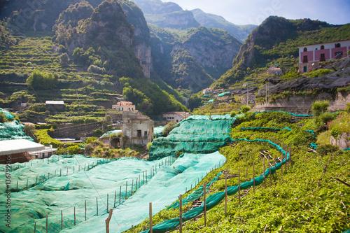 Hills Adda Instant Garden : Quot italy vineyard and orange garden hills stock photo