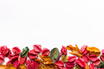 Colorful dry leaves and white background