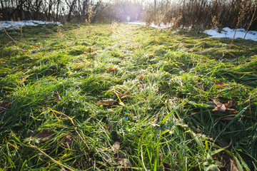 Fresh green grass growing in a meadow near forest at an early spring time after cold winter with snow melting and warm sun shine, beautiful outdoor nature landscape