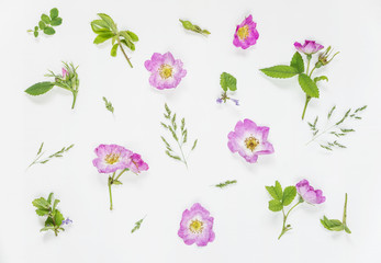 Natural background with pink wild rose flowers