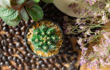 The cute little cactus