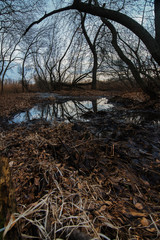 Forest river in the flooded areas in late autumn