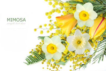 Mimosa and narcissus flowers bunch isolated on white background