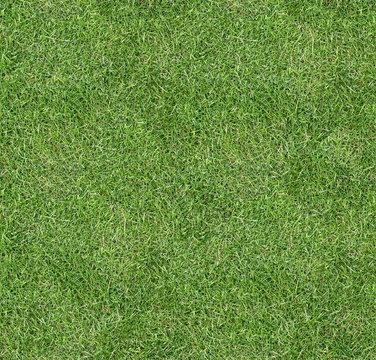 Seamless square green grass texture.