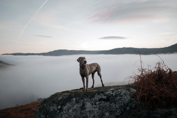 Dog Posing on a Rock