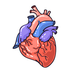 Hand drawing sketch anatomical heart.Cartoon style vector illustration.