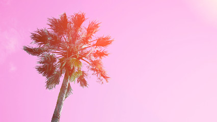 One palm tree on blue sky background. The bottom view, sun glare. Pop Art color. Sun glow effects.