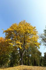 Maple Park in autumn