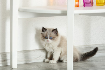 Cute little kitten at home