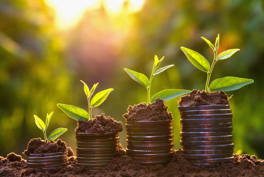 Money growing concept,Business success concept, Tree growing on pile of coins money