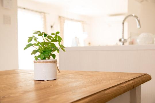 ダイニングテーブルに置いてある観葉植物