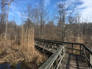 Boardwalk through wetland in Mississippi in winter