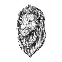 Hand drawn sketch of lion head. Vector illustration.