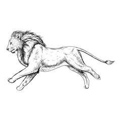 Hand drawn sketch of running lion. Vector illustration.