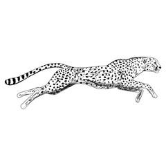 Hand drawn sketch of running cheetah. Vector illustration.
