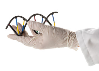 Researcher with glove holding DNA molecule model
