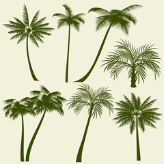 Summer holiday palm tree vector silhouettes