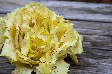 Castelfranco radicchio lettuce