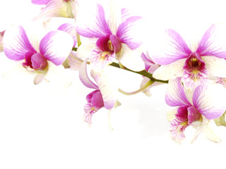 Fotobehang Bloemen vrouw beautiful orchid isolated on white background