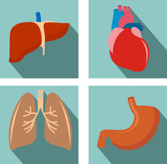 set of organs - lungs, liver , heart, stomach