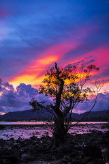 Firey sunset with mangrove tree