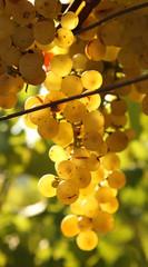 Yellow grape