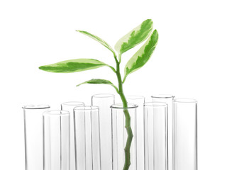Plant in test tube on white background