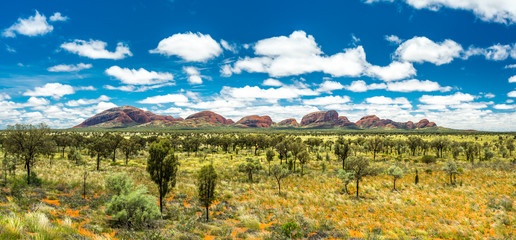 Kata Tjuta after Rain. Stunning panoramic view of Kata Tjuta, The Olgas, Australia. Grass and trees in vibrant green after heavy rains. Soil and rocks in intense red and orange.