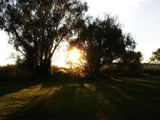 paesaggio con alberi al tramonto