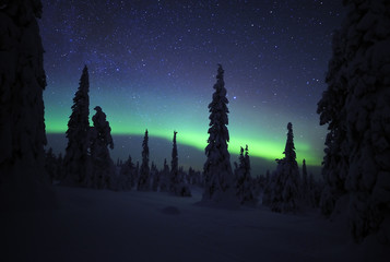 Northern lights, in snow covered forest, Riisitunturi National Park, Finland, February 2009