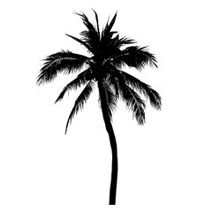 silhouette of coconut tree, palm tree illustration, vector
