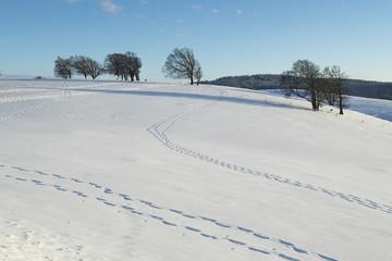 Winterlandschaft mit Spuren im Schnee, Schwarzwald