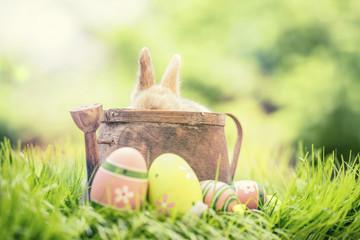 schöne Osterkarte Natur Osterhase