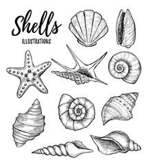 Hand drawn vector illustrations - collection of seashells.  Mari