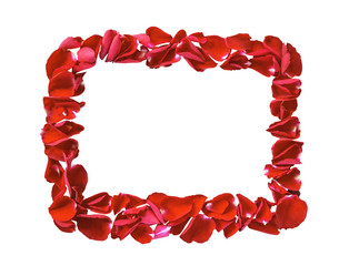 Red petals rose flower frame isolated