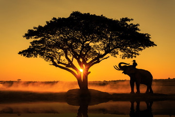 Silhouette of the elephant under a tree in Thailand.