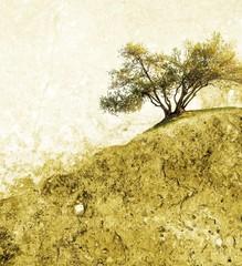 Single olive tree in empty landscape.