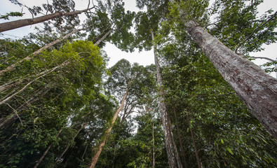 High tree in rain forest