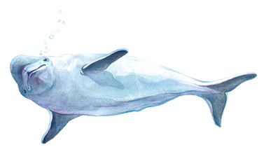 Watercolor realistic dolphin animal isolated on a white background illustration.