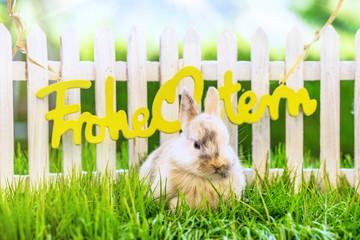 Frohe Ostern Karte Osterkarte Hase bunt
