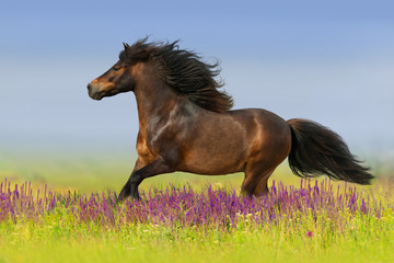 Bay horse with long mane run gallop on flowers
